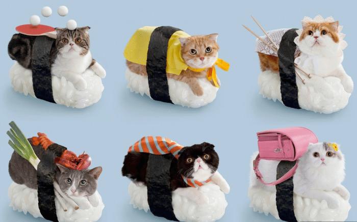 sushi_cat_kore-kore
