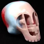 senior-discount-best-revenge-paper-plastick-skull